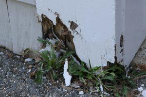 exterior trim rot